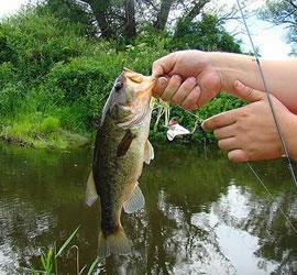 2016 Fish Limits